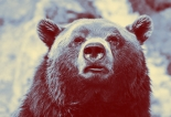 Bear - unsplash3